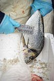 Sparidae Sea bream on fish market. Woman cleaning the fish royalty free stock photography