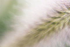 Spark 6. Close-up photo of a fluff hair, macro Stock Image