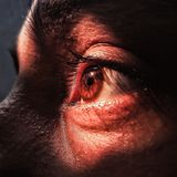 In the spark of sun, the eyes remain silent royalty free stock photos