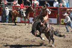 Sparka bakut hästCowboy Fotografering för Bildbyråer