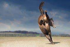 Sparka bakut hästen på naturbakgrund Arkivfoto