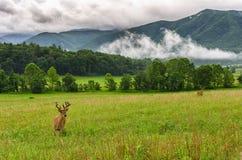 Sparka bakut i sammet, den Cades lilla viken, Great Smoky Mountains arkivfoto