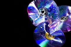 Sparkle DVD royaltyfri foto
