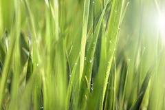 Sparkle Grass Stock Images