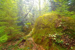 Sparkle mountain forest Stock Images