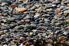 Sparkling beach pebbles Royalty Free Stock Photos