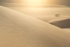 Sparkling Desert Dunes. Sunlight glistens in the sparkling and rippled sands of dunes in Death Valley, California royalty free stock image