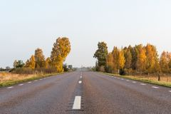 Sparkling fall colors by roadside Royalty Free Stock Image