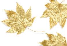 Sparkling fall leaves Royalty Free Stock Images