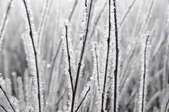 Sparkling frost Stock Images