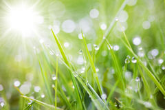 Sparkling grass Stock Photo