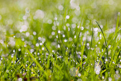 Sparkling grass Royalty Free Stock Images