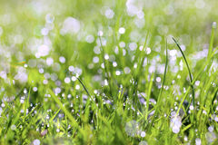 Sparkling grass royalty free stock photo