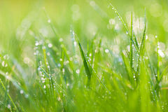 Sparkling grass Stock Image