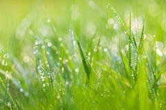 Sparkling grass Stock Image