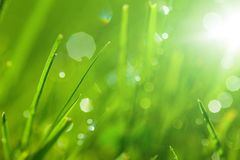 Sparkling grass. Detail of green grass with sparkling dewdrops royalty free stock photos