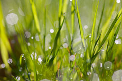 Sparkling grass Stock Photos