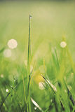 Sparkling grass Stock Photography