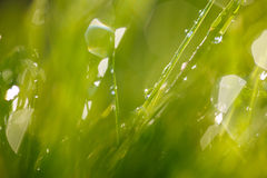 Sparkling grass Royalty Free Stock Photos