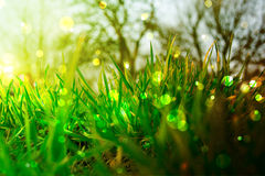 Sparkling grass. Detail of green grass with sparkling lights stock photo