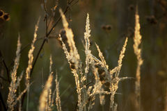 Sparkling grass in the sunset light Stock Images
