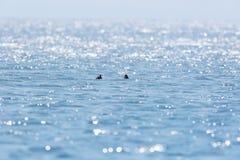 Sparkling lake surface. Sparkling water surface in poyang lake natural reserve Stock Photos