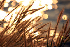 Sparkling light from the river Royalty Free Stock Photo