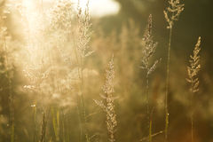 Sparkling morning light. Morning sun shining through the dew on grass Royalty Free Stock Photography