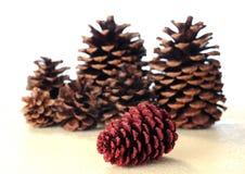Sparkling pine cone Stock Photos