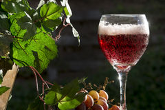 Sparkling Red Wine Royalty Free Stock Photos