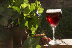 Sparkling Red Wine Royalty Free Stock Photography