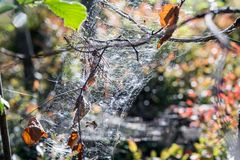 Sparkling spiderweb hangs on dry branches closeup Stock Photos