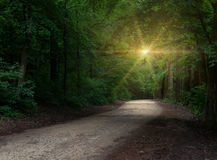 Sparkling sunlight over the road Royalty Free Stock Images