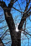 Sparkling sunlight peers through oak branches coated with ice. Deep blue sunny skies, warm March day, barren branches,  no Stock Photos