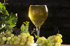 Sparkling White Wine Royalty Free Stock Photography