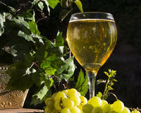 Sparkling White Wine Royalty Free Stock Photos