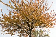 Sparkling colorful tree Stock Image