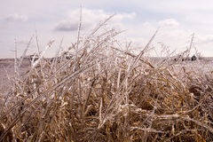 Sparkling Winter Grass Stock Photography