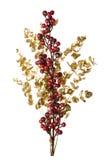 Sparkly красные ягоды на золотистых листьях изолировали предпосылку Стоковое Изображение RF