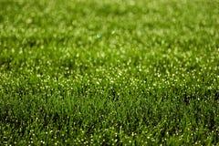 sparkly gräs Arkivfoto