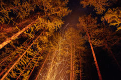 Sparks from a bonfire night in the woods flying in the sky. Fire in the woods under a starry sky, the trees illuminated Stock Photos