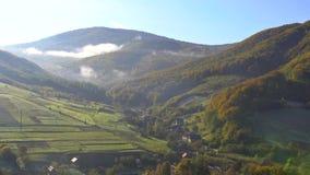 Sparren bosdiehout op berggebied tegen een de herfstochtend door mistmist wordt behandeld stock videobeelden