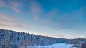 Sparren boslandschap en zonsonderganghemel bij sneeuwwintertijd Stock Afbeeldingen