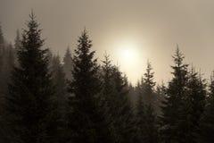 Sparren in de Mist Royalty-vrije Stock Afbeeldingen