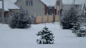 Sparren in de sneeuw stock videobeelden