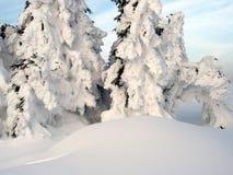 Sparren in de sneeuw Stock Foto's