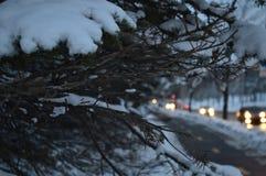 Sparren in de sneeuw en auto's in de nacht Stock Fotografie
