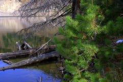 Sparren door het meer Stock Foto