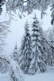 Sparren door sneeuw in de winterbos dat volledig worden behandeld royalty-vrije stock afbeeldingen