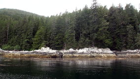 Sparren en pijnbomenbos op rotsachtige kust als achtergrond van Vreedzame Oceaan in Alaska stock footage